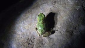 Una rana verde Imagenes de archivo