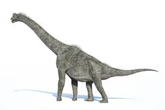 Una rappresentazione Photorealistic di 3 D di un Brachiosaurus. Fotografia Stock Libera da Diritti