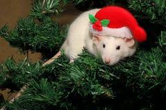 Una rata en un sombrero de la Navidad, un ratón de la Navidad Símbolo del nuevo 2020 en el calendario chino Año Nuevo y concepto  imagenes de archivo