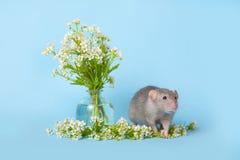 Una rata linda al lado de wildflowers delicados en un fondo azul El s?mbolo de 2020 Animal dom?stico lindo