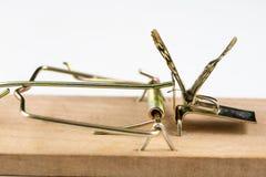 Una ratonera y una mariposa que se sientan en ella Trampa del insecto para el metap fotos de archivo