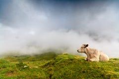 Una reclinación de la vaca Imagenes de archivo