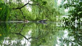 Una reflexión de espejo del agua en naturaleza imagen de archivo libre de regalías