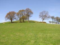 Una riga degli alberi in cima ad un pendio di collina erboso immagine stock