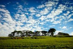 Una riga degli alberi sulla collina verde Fotografie Stock
