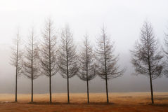 Una riga dell'albero Immagini Stock Libere da Diritti