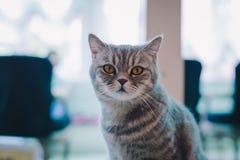Una ritrattistica di un gatto nel caffè con luce morbida ed il fuoco molle Rilassi e conforti immagini stock libere da diritti