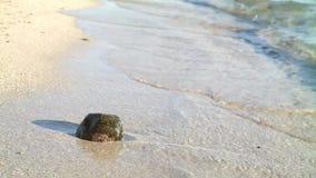 Una roca en la orilla almacen de metraje de vídeo