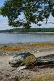 Una roca en una playa Fotos de archivo libres de regalías