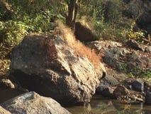 Una roccia Immagine Stock