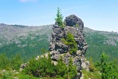 Una roccia con un albero Fotografie Stock