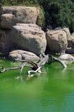 Una roccia e un mare in un giardino zoologico Fotografie Stock