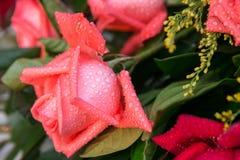 Una rosa con le perle di acqua Fotografia Stock