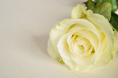 Una rosa di bianco Fotografia Stock