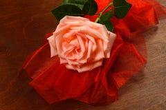 Una rosa di rosa su un fondo scuro Immagini Stock Libere da Diritti