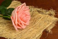 Una rosa di rosa su un fondo scuro Immagini Stock
