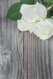 Una rosa di tre bianchi immagini stock