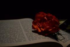 Una rosa e un libro aperto Immagine Stock