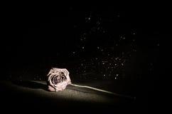 Una rosa que se marchita significa el amor perdido, divorcio, o una mala relación, muertos subió en fondo oscuro foto de archivo libre de regalías