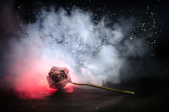 Una rosa que se marchita significa el amor perdido, divorcio, o una mala relación, muertos subió en fondo oscuro fotos de archivo