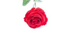Una rosa roja en el fondo blanco, aislado Fotografía de archivo libre de regalías