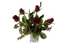 Una rosa roja en mano izquierda imagenes de archivo