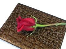 Una rosa rossa. Fotografia Stock