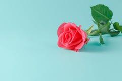 Una rosa rossa bagnata isolata su un fondo dell'acquamarina Fotografie Stock Libere da Diritti