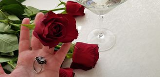 Una rosa rossa e un anello d'argento con la grande pietra bianca sulla mano umana fotografia stock
