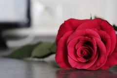 Una rosa rossa si trova su una tavola di legno Immagini Stock