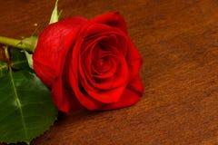 Una rosa rossa su un fondo scuro Immagine Stock Libera da Diritti
