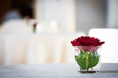 Una rosa rossa in un bicchiere d'acqua Immagini Stock Libere da Diritti