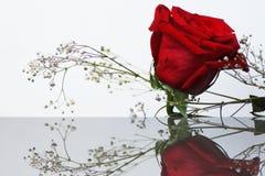 Una rosa sul vetro immagini stock libere da diritti