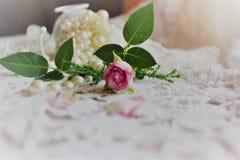 Una Rose rosada Imagen de archivo