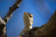 Una salamandra Foto de archivo