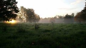 Una salida del sol en medio del revestimiento de la naturaleza Fotos de archivo libres de regalías