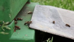 Una scatola dell'ape stock footage