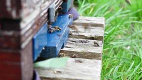 Una scatola dell'ape video d archivio