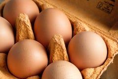 Una scatola delle uova con 6 uova marroni fresche Immagini Stock Libere da Diritti