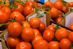 Una scatola di pomodori freschi fotografia stock libera da diritti