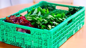 Una scatola ha riempito di insalata e di verdure fresche dal locale, agricoltura biologica immagine stock