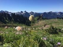 Una scena dal Mt più piovoso nello Stato del Washington Immagini Stock Libere da Diritti