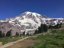 Una scena dal Mt più piovoso nello Stato del Washington Fotografia Stock