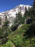Una scena dal Mt più piovoso nello Stato del Washington Immagine Stock