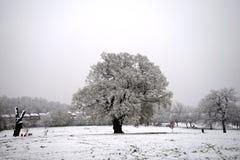 Una scena di inverno Fotografia Stock Libera da Diritti