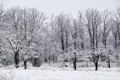 Scena di inverno in frutteto Immagini Stock