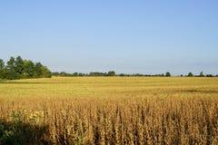Una scena piacevole di un paesaggio canadese di autunno in anticipo immagini stock