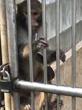 Una scimmia fotografia stock
