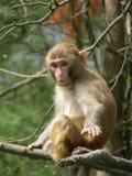 Una scimmia fotografia stock libera da diritti