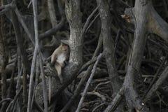 Una scimmia che si siede sull'albero immagini stock